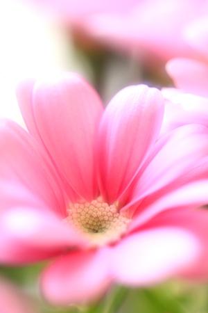 Flower image Stock Photo - 121742523