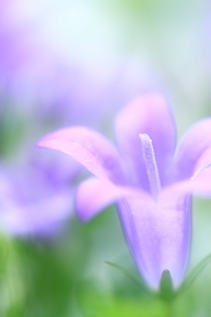 Flower image Stock Photo - 121742718