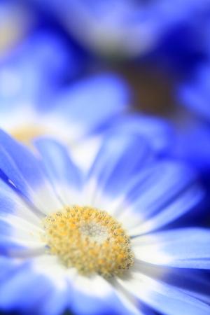 Flower image Stock Photo - 121742976