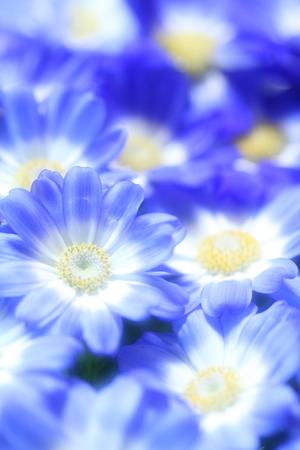 Flower image Stock Photo - 121743006