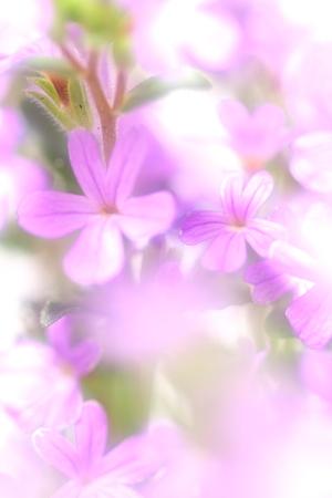 Flower image Stock Photo - 121744571