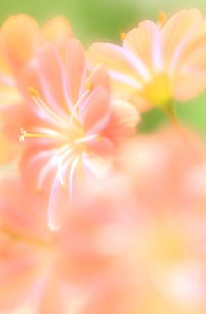 Flower image Stock Photo - 121744617