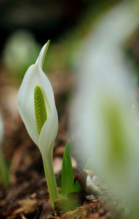Flower image Stock Photo - 121745349