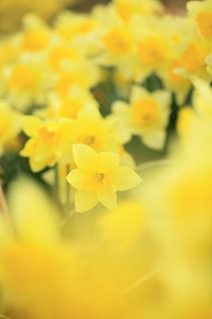 Flower image Stock Photo - 121745738