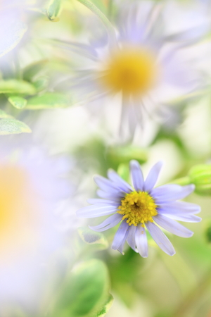 Flower image Stock Photo - 121745808