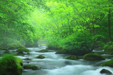 Aomori Prefecture, summer stream