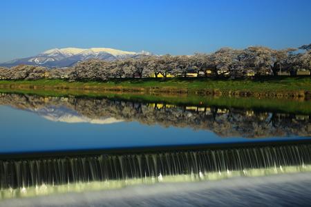 Blue sky and cherry trees Reklamní fotografie