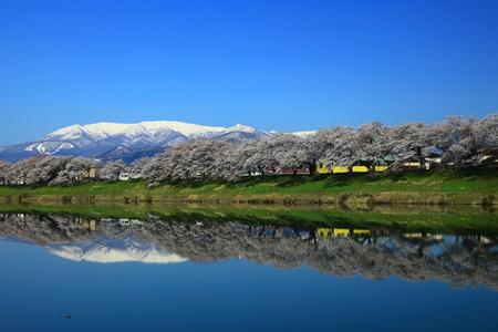 Spring cherry tree roadside trees Reklamní fotografie