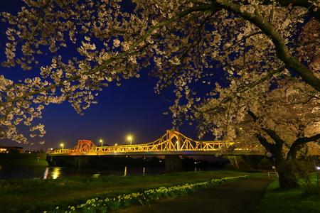 Iwate Prefecture Spring Night Sakura 写真素材 - 122456127