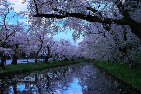Hirosaki Park in Spring