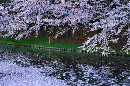 Aomori Prefecture Spring Hirosaki Park 写真素材 - 122456128