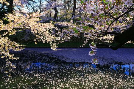 Aomori Prefecture Spring Hirosaki Park 写真素材 - 122456299