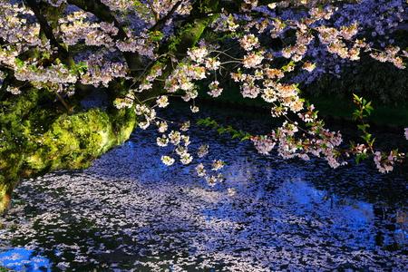 Aomori Prefecture Spring Hirosaki Park