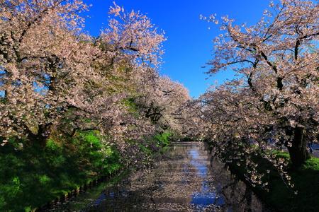 Aomori Prefecture Spring Hirosaki Park 写真素材 - 122456308
