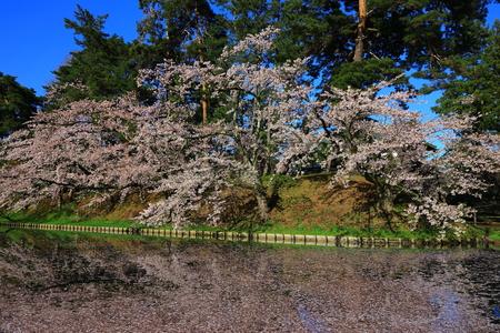 Aomori Prefecture Spring Hirosaki Park 写真素材