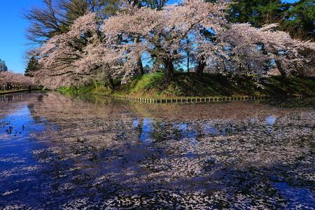 Aomori Prefecture Spring Hirosaki Park 写真素材 - 122456491