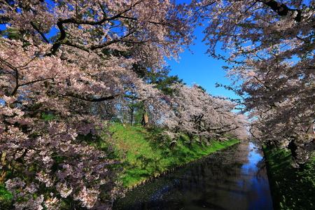 Aomori Prefecture Spring Hirosaki Park 写真素材 - 122456492