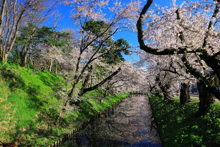 Aomori Prefecture Spring Hirosaki Park 写真素材 - 122456493