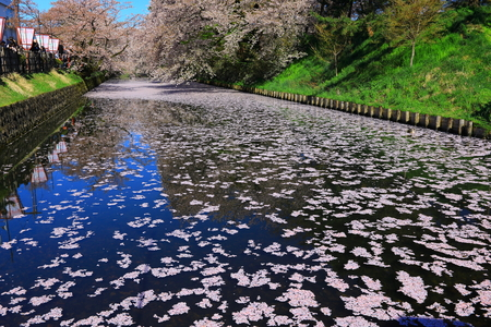 Aomori Prefecture Spring Hirosaki Park Фото со стока