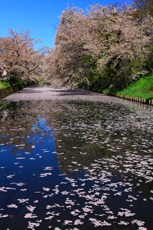 Aomori Prefecture Spring Hirosaki Park 写真素材 - 122456496