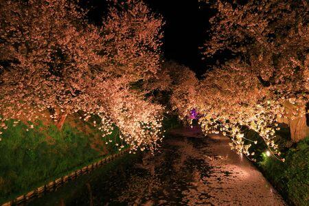 Aomori Prefecture Spring Hirosaki Park Stok Fotoğraf