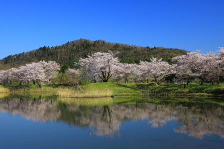 Japan natural park view in Spring time