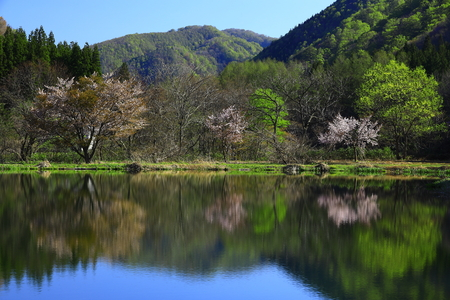 Fresh Greenery Lake in Iwate Prefecture