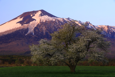 Iwate volcano and one cherry tree