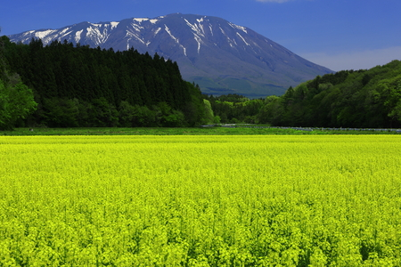 Iwate Prefecture, Mountain with yellow rape field