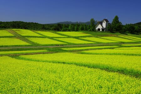 Miyagi Prefecture in scenery of Blue sky and rape field