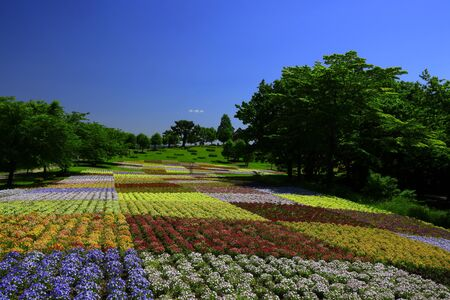 beautiful Miyagi Prefecture in scenery of Blue sky and flowering field