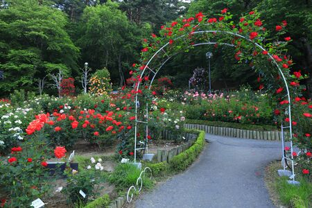 Hanamaki hot springs rose garden 写真素材