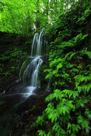 Summer waterfall Stockfoto