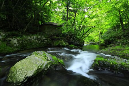 Summer mountain stream in Ichinoseki City, Iwate Prefecture