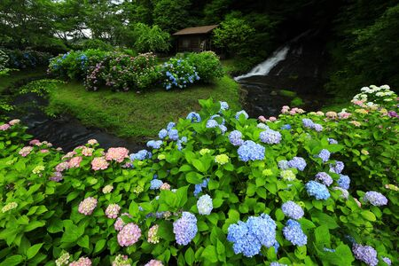 Water mill and hydrangea 스톡 콘텐츠