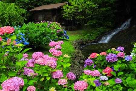 Hydrangea and watermill Standard-Bild