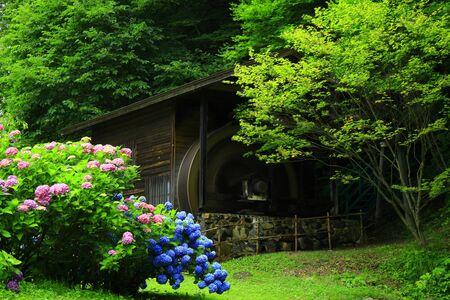 Water mill and hydrangea
