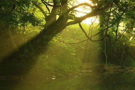 Iwate Prefecture, summer stream