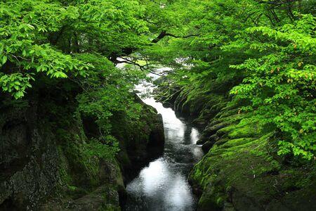 Summer mountain stream in Nishiwaga-cho, Iwate Prefecture Standard-Bild