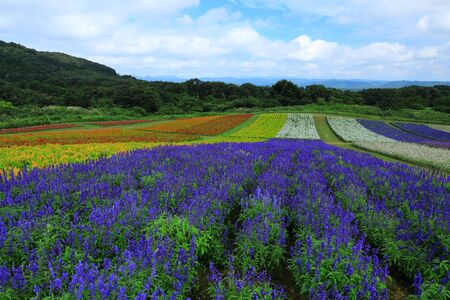 Miyagi Prefecture Blue sky and Flower garden