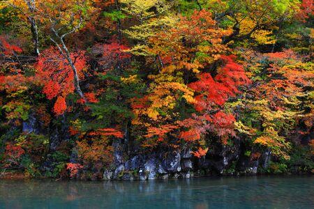 Ley otoño cae Foto de archivo