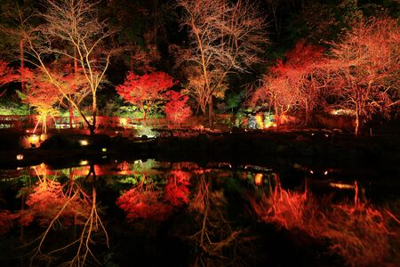 Oshu City, Iwate Prefecture Light-up of Autumn Leaves
