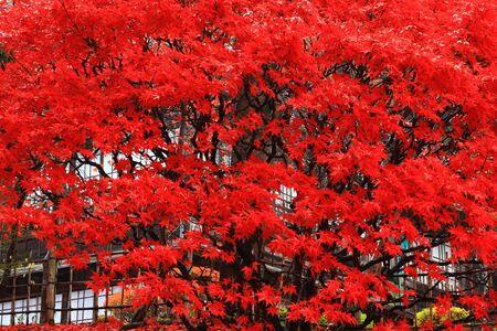 Hanamaki Onsen old Matsuunkaku with autumn leaves