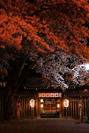 Shrine and cherry blossoms