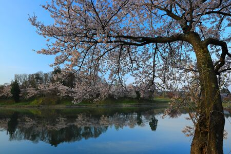 Iwate Park in Spring, Morioka City, Iwate Prefecture