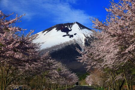 Iwate and cherry blossoms