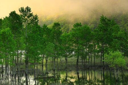 Nishikinaki Lake of Fresh Green