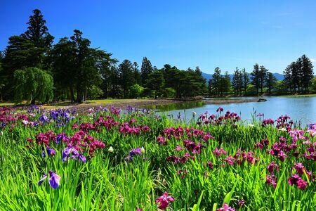 World Heritage hiraizumi-motsu-JI IRIS Festival
