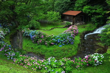 Iwate Prefecture Watermill and Hydrangea Flowers