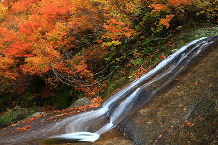 Valley of autumn leaves in Kita-Akita City, Akita Prefecture Фото со стока